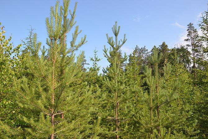 Metsän Omistaminen